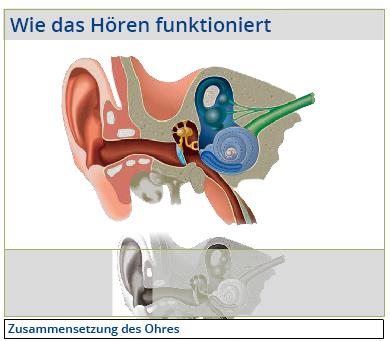Wie das Hören funktioniert
